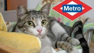 Rescate del gato de Metro Madrid - PGM. 88