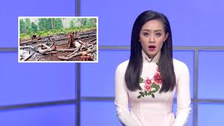 VIETV News Tin Viet Nam Nov 15 2017
