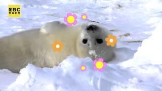 【聚焦全世界】新書上市,北冰洋最萌小寵物,舒夢蘭主播帶您探訪極地新生命!
