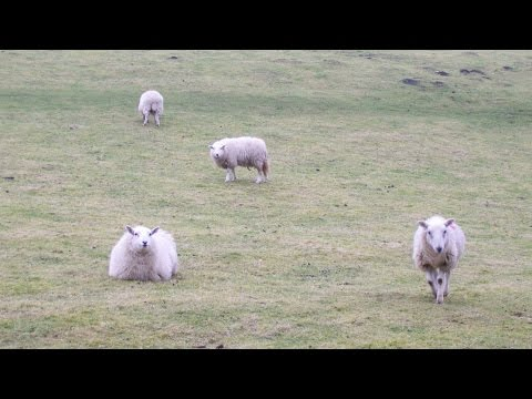 Long Mynd Country Walk Scenery - Shropshire Walks - Tour Eng