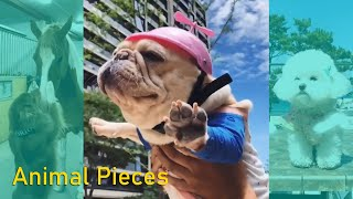 Funny Dog Vines Try not to Laugh 2019 Animal Videos   Funny Pet Compilation