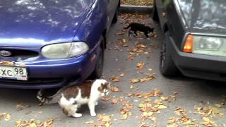 Санкт-Петербург. Кошки во дворе