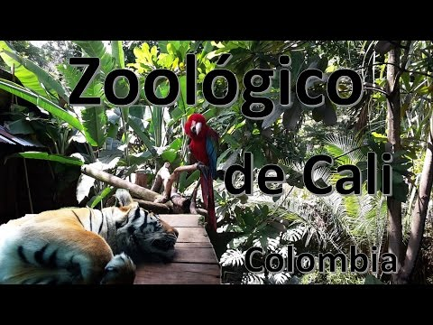 Animales del Zoológico de Cali - Colombia