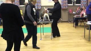 Haughmill Pup (squeak)  At Ringcraft Training