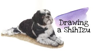 Drawing a ShihTzu with Colour …