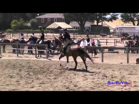 155S Elaine Sanders on Red Baron JR Beginner Novice  Jumping Shepherd Ranch June 2014