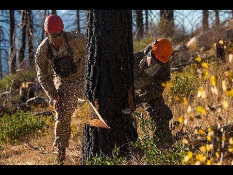 Tree Removal Service Bethlehem CT | Cutting & Trimming Arborists