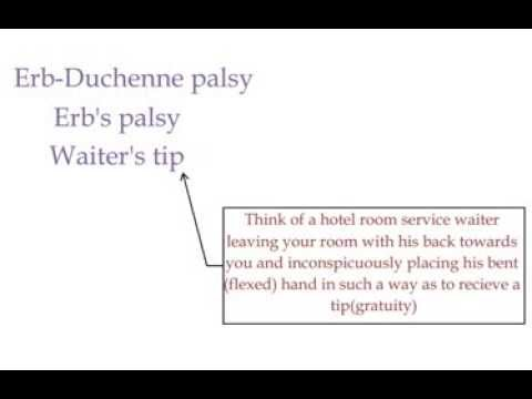 erbs palsy erb duchenne palsy waiters tip youtube