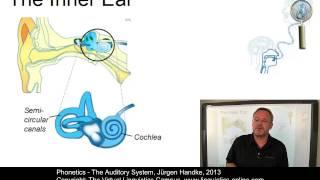 Phonetics - The Auditory System