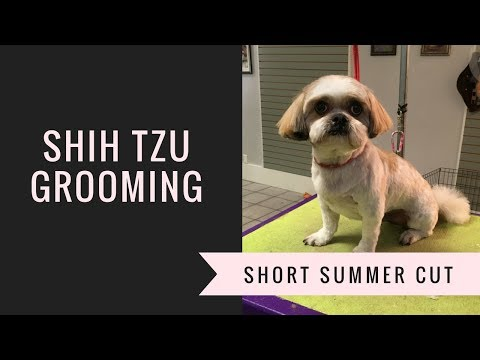 SHIH TZU GROOMING: SUMMER CUT