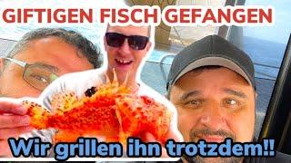 GIFTIGER FISCH gefangen und trotzdem GEGRILLT !!! --- Klaus grillt feat. Dein Lieblingsangler + PETI