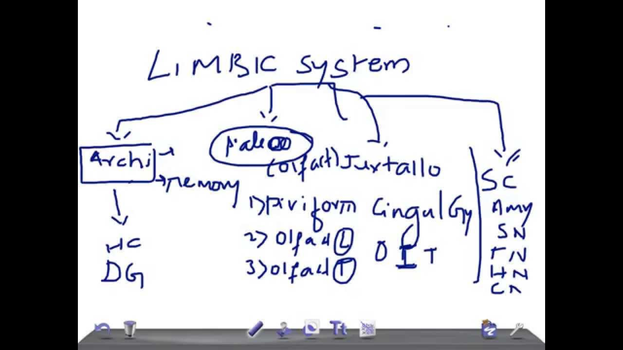 Medical Video Lectures: Limbic system & its structures ... Limbic System Add