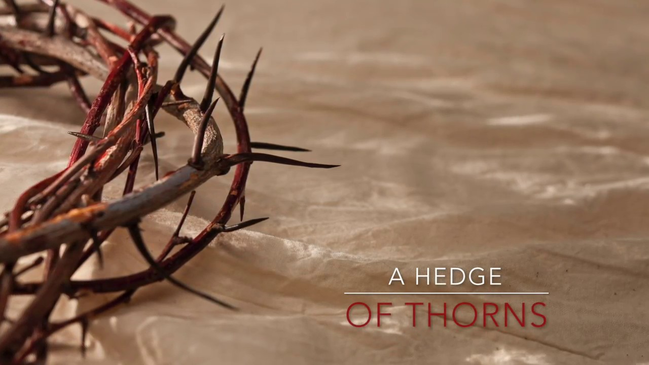 A Hedge of Thorns