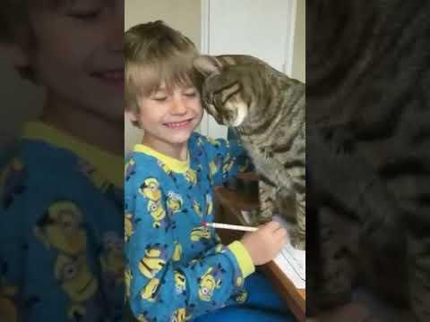 Видео как кот мешает мальчику делать уроки