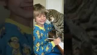 Кот, мешающий школьнику делать домашнюю работу