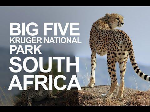 Meet the Big Five 5 at Kruger National Park, South Africa