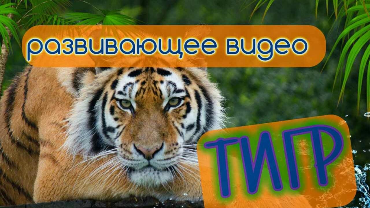 Рассказ про тигра по англискому языку 5 класс