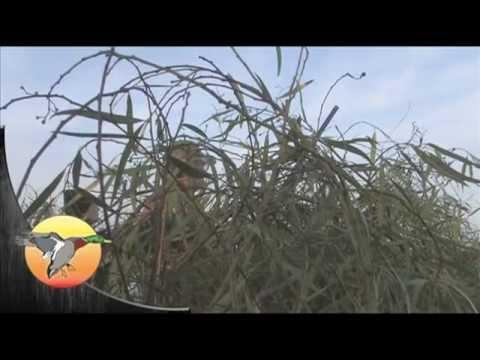 Argentina Duck Hunt Muchos Patos Argentina Ep10351