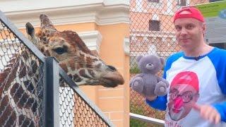 Дима в ЗООПАРКЕ. ЖИРАФ. Видео для детей про животных. Серия 5