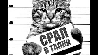 Приколы с котами) Смешные коты! Улётная подборка приколов с котами(CatsLIVE)