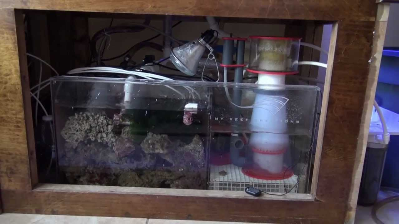 120 Gallon Reef Tank Tour Lighting And Filtration System