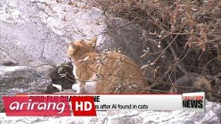 بالفيديو.. طوارئ في كوريا الجنوبية بسبب