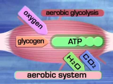 diagram of the atp molecule paragon 8145 20 defrost timer wiring aerobic system (aerobic glycolysis).wmv - youtube