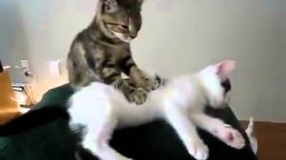 Коты умеют делать массаж