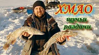 ОСТАВИЛИ ЖЕРЛИЦЫ НА НОЧЬ Рыбалка на Севере в ХМАО