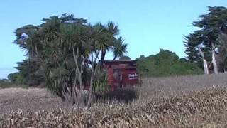 Fleming Bros Harvesting Corn New Zealand