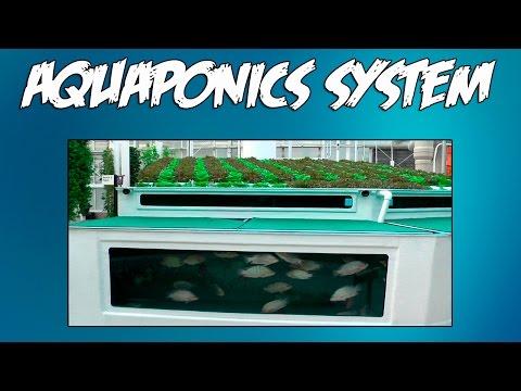 Aquaponics Journal