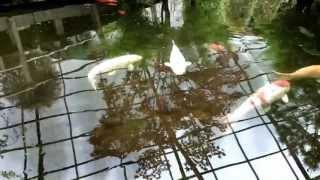 Viherpaja Vantaa - Japanilainen puutarha