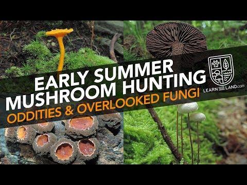 Early Summer Mushroom Hunting —Oddities & Overlooked Fungi