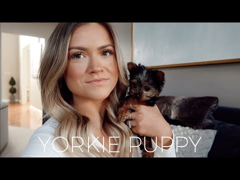 WE GOT A PUPPY! | TEACUP YORKIE | The Konfederats