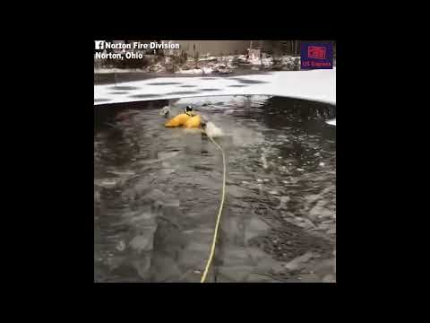 Bobby Gunther Walsh - Dog rescued from semi-frozen pond