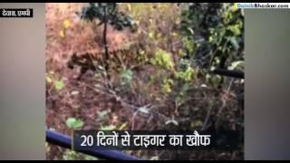 जंगल में टाइगर पर लगाया निशाना, चकमा दे भागा | Caught on Camera