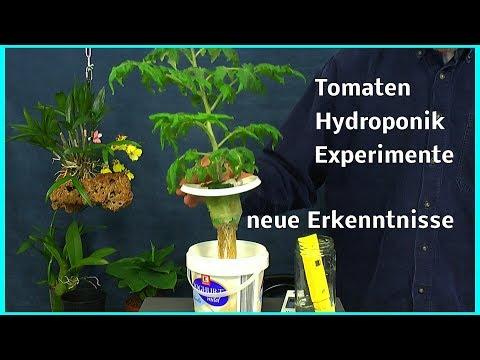 Tomaten In Hydroponik Neue Erkenntnisse Zum Düngen Und PH Im Experiment
