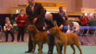 Crufts 2009 Dogue De Bordeaux