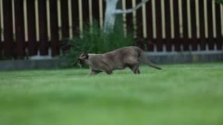 Кот по имени Осман