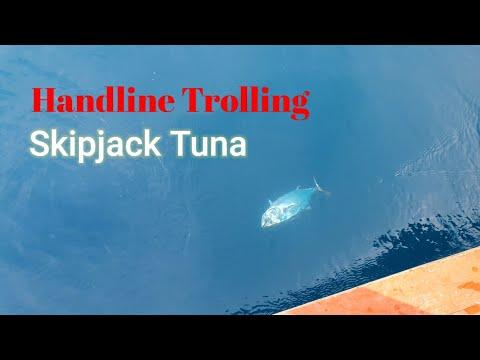 Handline Trolling   FISHING SKIPJACK TUNA