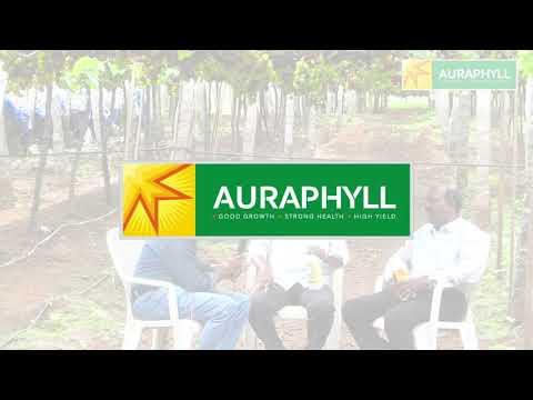 Auraphyll   - Progressive Farmers - 2 of 3