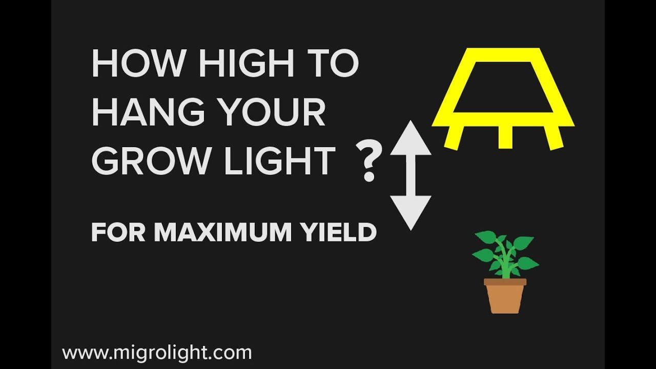 How Far Should Grow Lights Be From Plants Learn How High