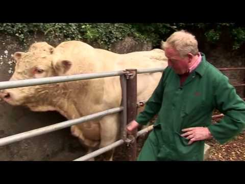 Profit from production Beefing up breeding