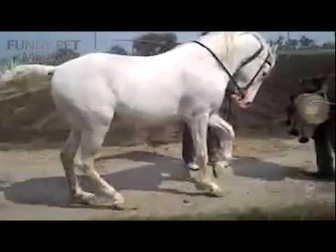 Funny Horse Videos 2015 _ 2016 🐴 (HD) [Funny Pet Media].mp4