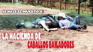 UNA HACIENDA LLENA DE CABALLOS BAILADORES PURA SANGRE