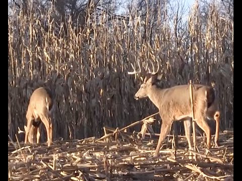 turn-a-food-plot-into-a-year-round-food-source-for-deer