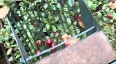 Семена газонных трав купить вы можете в интернет-магазине или приехать к нам в офис. У нас вы найдете универсальные и узкоспециализированные, теневыносливые и засухоустойчивые, мавританские и партерные газонные травы по самым выгодным ценам в необходимом вам количестве.
