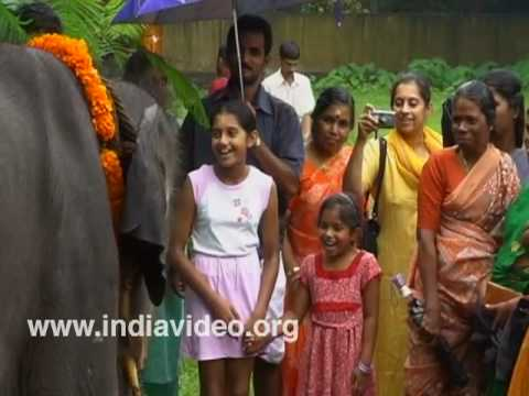 Children near baby elephant at Vadakkumnathan temple, Thrissur