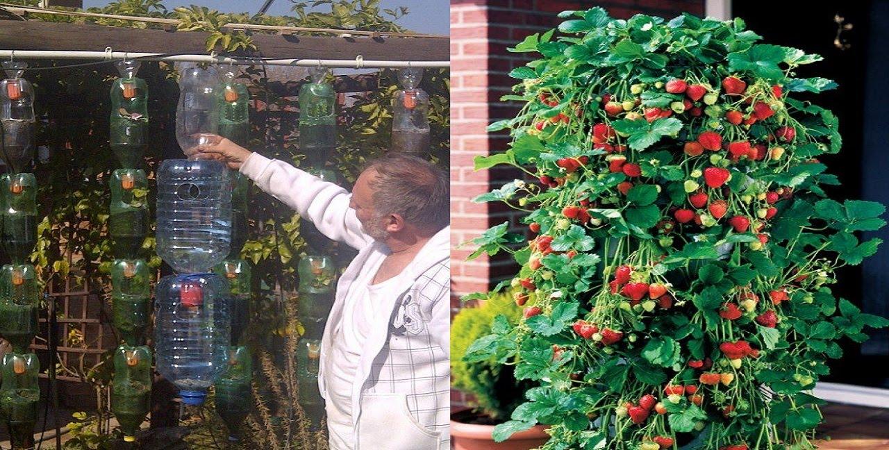 Idea genial para cultivar fresas en botella de pl stico en for Casa de plastico para jardin