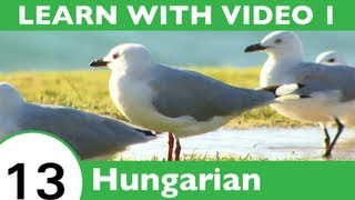 Learn Hungarian with Video - Birds of a Feather Flock Together at HungarianPod101.com!